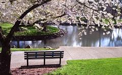 beautiful spring small