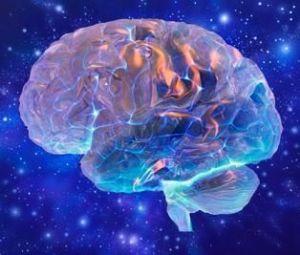 inside of the brain