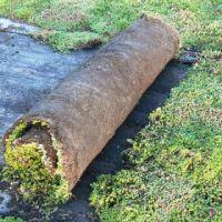 Fully Grown Sedum Carpet / Sedum Turf