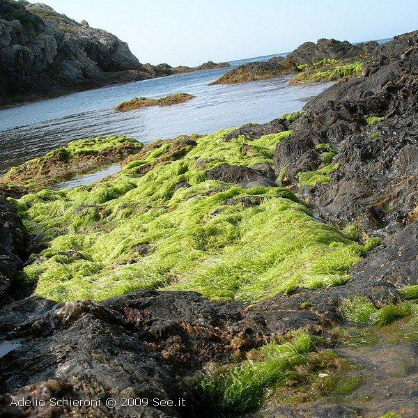 Vieni e goditi le immagini di Porquerolles, Costa Azzurra...