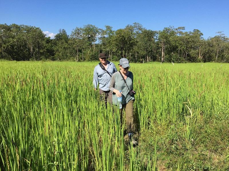 Gibbon Trek adventure in Ratanakiri