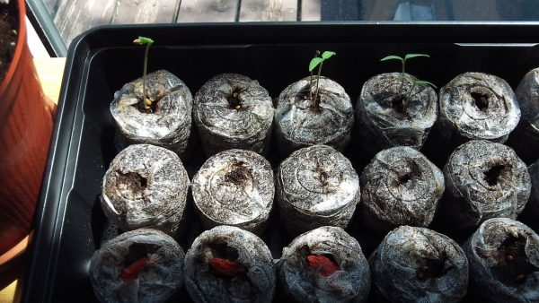 Start Seeds Easily with Peat Pellets
