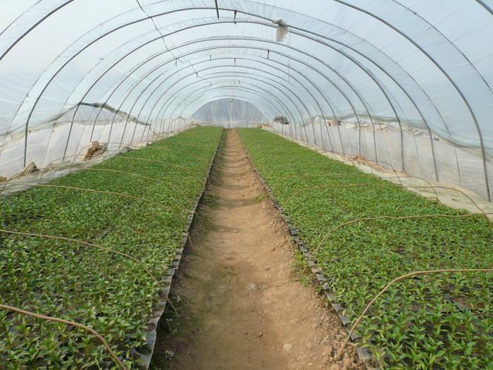 LANDON Seed Trays