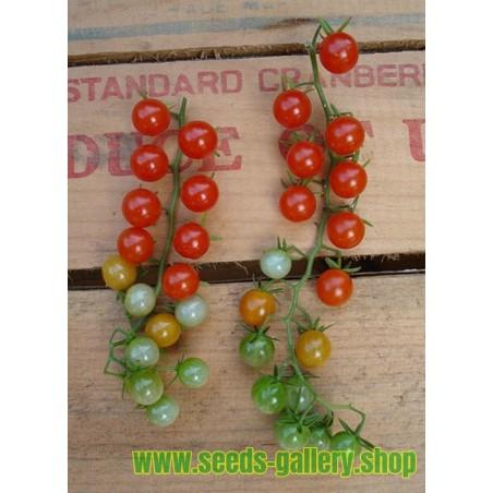 sweet pea currant # 89