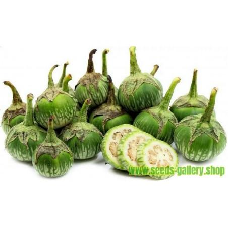 Semi di Melanzana Verde Tailandese Solanum melongena Semi in confezione 10