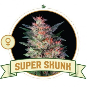 super-skunk-feminized
