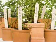 Theme Gardens – Planting Easy to Grow Herbs