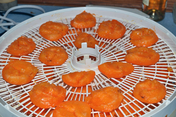 drying apricot halves