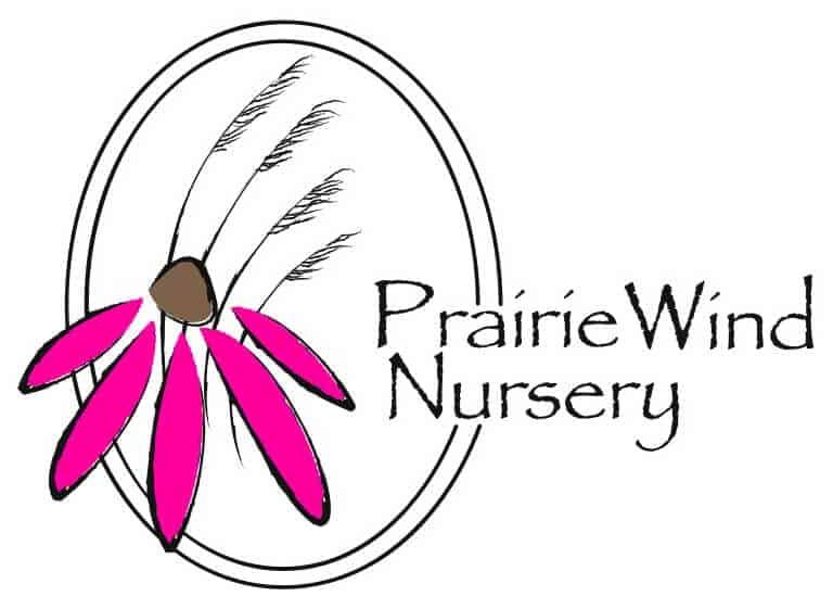 prairie_wind_pink