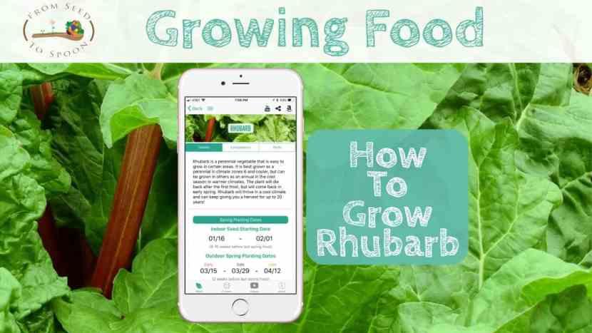 Rhubarb blog post