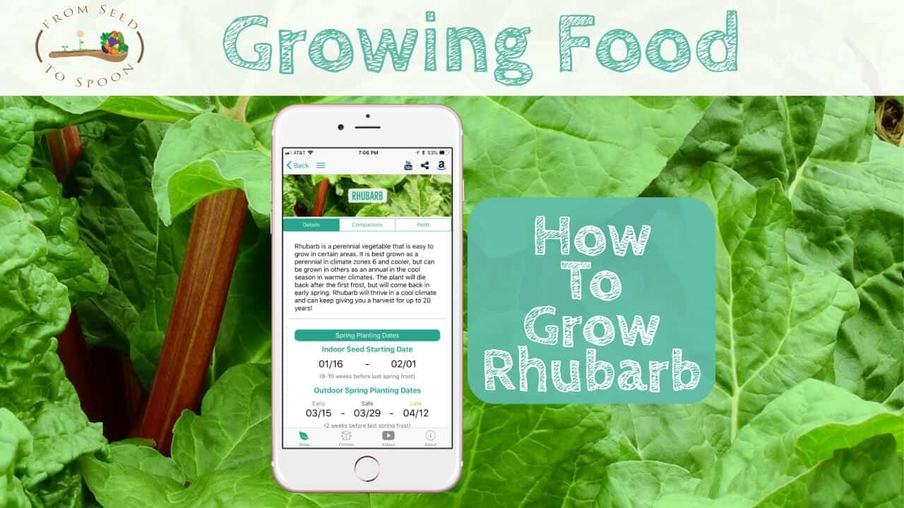 Rhubarb How To Grow And When To Plant In Your Backyard Or Patio Garden From Seed To Spoon Vegetable Garden Planner Mobile App