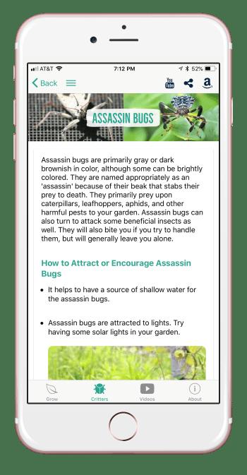 assassinbug