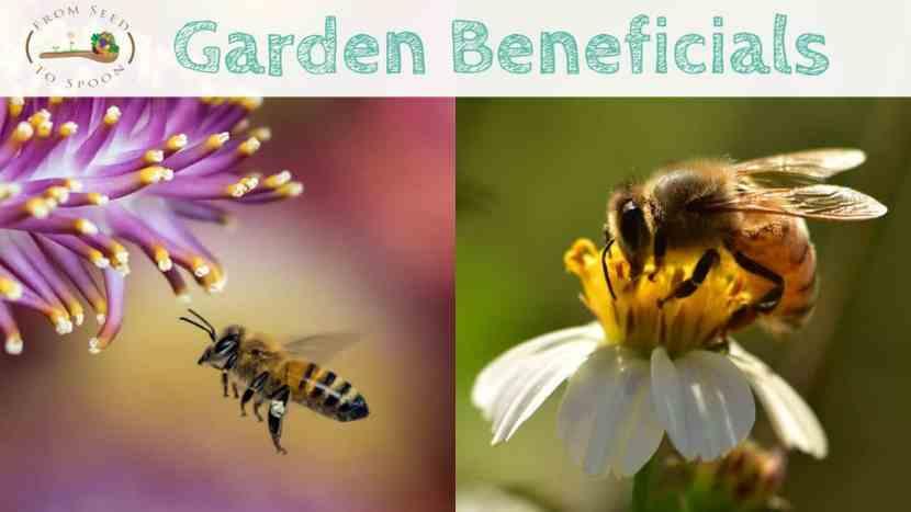 Honeybees blog post