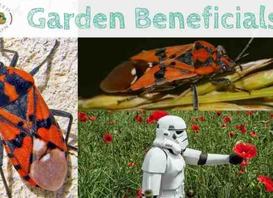 Soldier Bug blog post