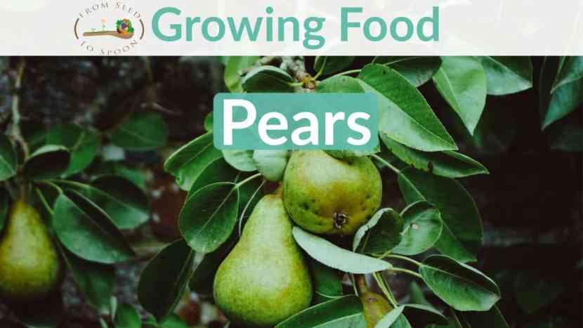 Pear blog post