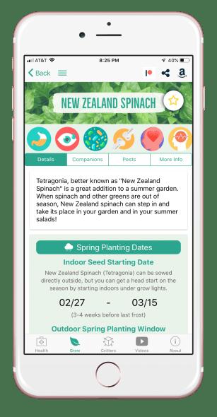 newzealandspinach