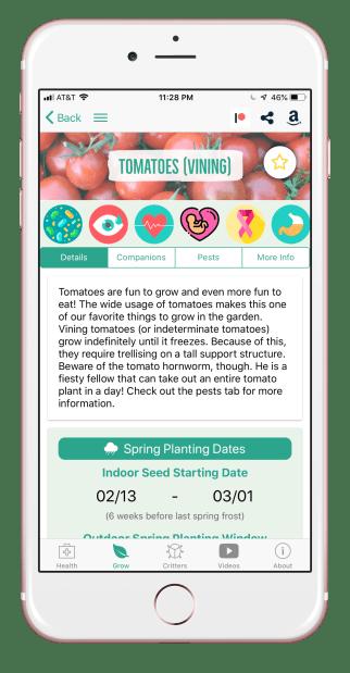 tomatoesvining