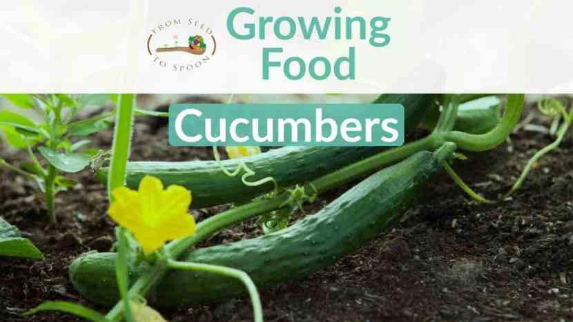 Cucumbers blog post