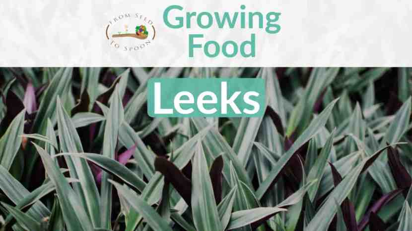 Leeks blog post