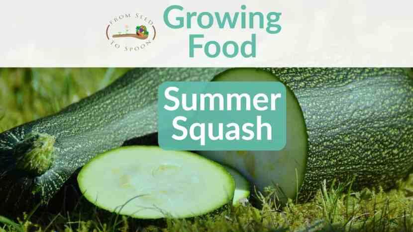 Summer Squash blog post