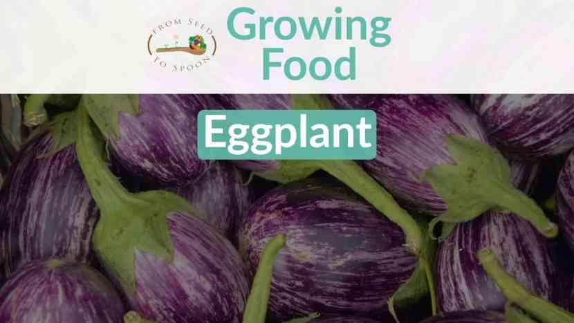 Eggplant blog post