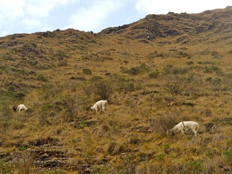 can you hike the inca trail without a guide? Machu picchu hike trek peru