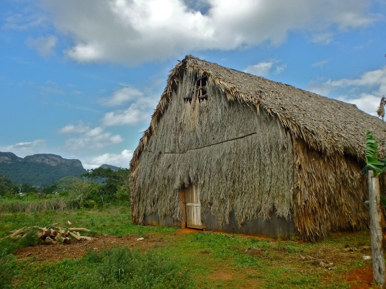 Tobacco plantation, Vinales Cuba where to stay in cuba how to get around cuba travel blog