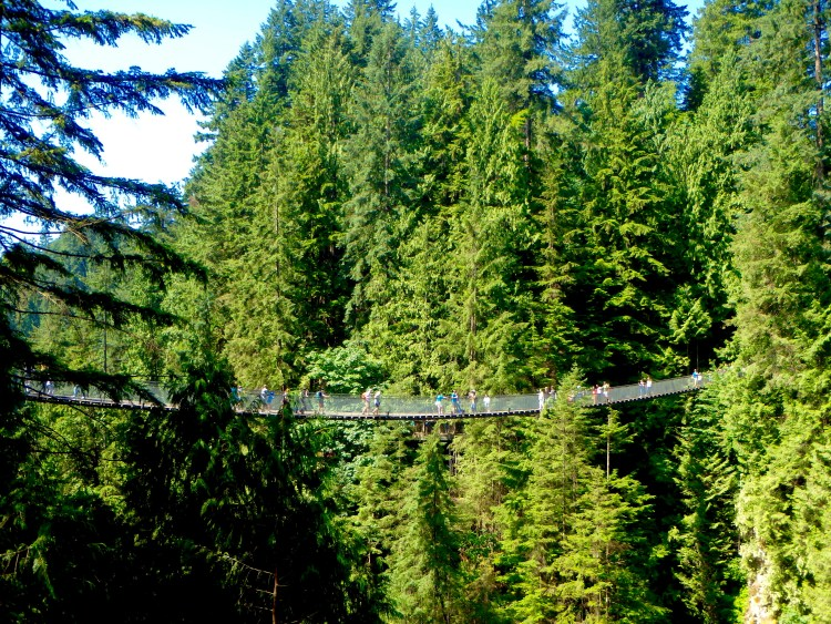 view of the Capilano Suspension Bridge how much is the Capilano suspension bridge travel blog