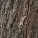 Tree Impression
