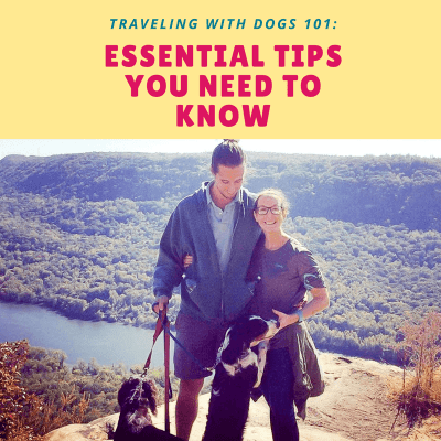 Traveling with Dogs 101: Essential Tips You Need to Know