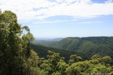 Beautful view from Springbrook NP