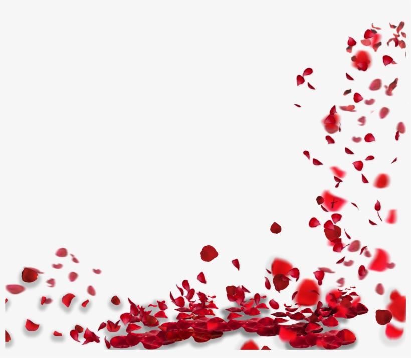 falling petals png rose