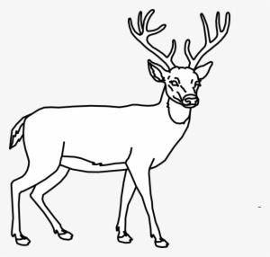 Deer Outline Clip Art At Clker Dessin De Cerf Facile Png Image Transparent Png Free Download On Seekpng