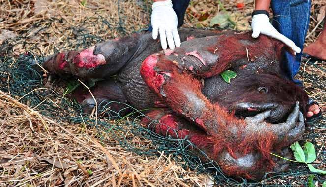 Say-No-To-Palm-Oil