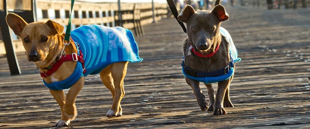 Dogs on Ventura Pier