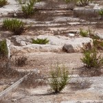 Weeds surround the low rock on which Mary is believed to have rested (Seetheholyland.net)