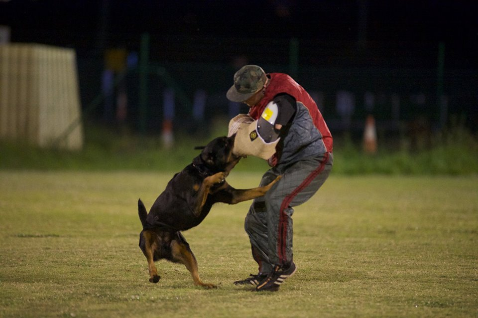 Seeuferhause LUCIANO. BH. IPOI Luc IPOI Protection2 – Breeding Working Rottweilers in Australia