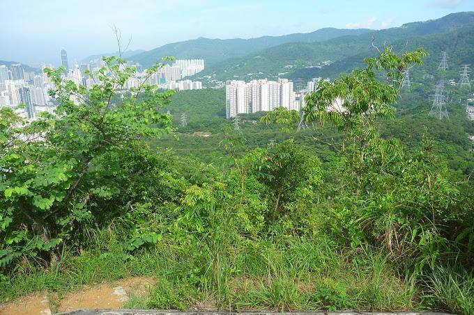 梨木樹-孖指徑-九華徑 - 行山 - SeeWide