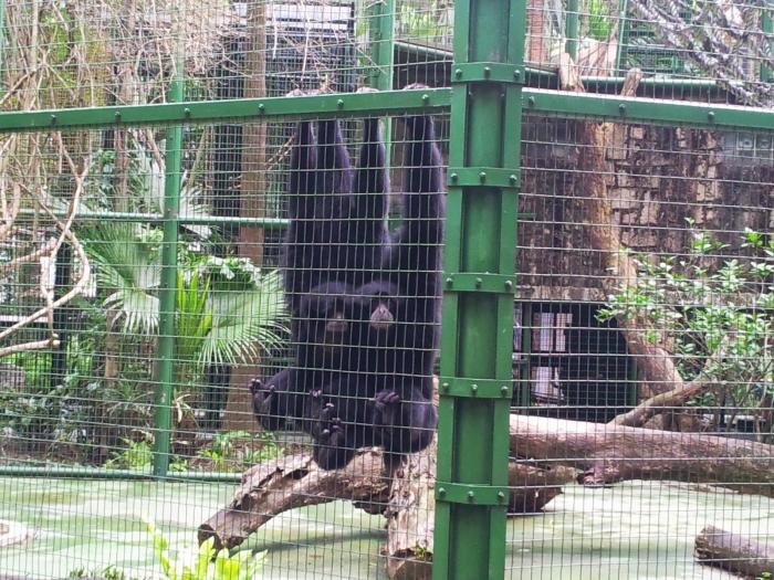 香港動植物公園 SeeWide