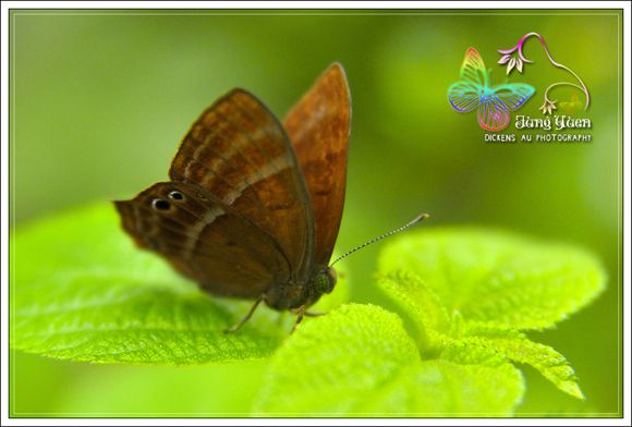鳳園蝴蝶保育區 - 大埔郊遊 , 鳳園, 蝴蝶, 攝影, 生態 - SeeWide 香港特搜