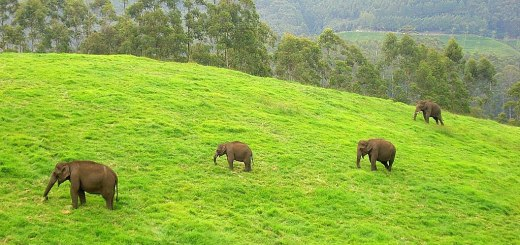 wildlife sanctuaries in kerala