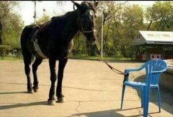 cavallo-sedia-e8f10342