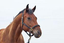 cavallo_sfondobianco-fd4011c1-1