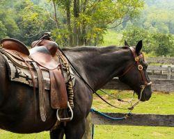 horse-176990_960_720-d2cabf47-1