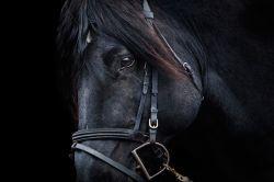 cavallo-d2f070fb