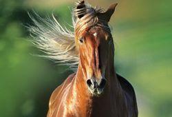cavallo_art-b0bf4b2f
