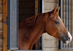 cavallo_stalla-ef4a0b15