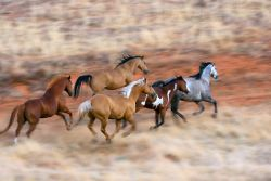 gallopping-jpg-5b45b639