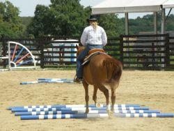 horse-444021_1280-b482aafd