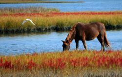 horse-60153_640-6281e447